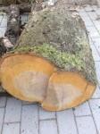 Ein bisschen Holz - nur ein bisschen